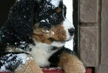Dogs Cats & Pets / They make life happier ! / by Joe Poalillo