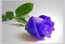 Flowers ✽ ✾ ✿ ❀ / ✽ ✾ ✿ ❀ ❁ ✽ ✾ ✿ ❀ ❁ ❃