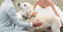 My Flower-Dog / This is a subset of my wedding folder dedicated to my dog, who will definitely be present at my wedding, no ifs ands or buts! <3