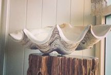Giant clam shells / Giant Clam Shells