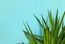 TURQUOISE / Turquoise color inspiration.
