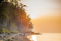 Beautiful Coast BC Forests / Images from many of the forests along the beautiful British Columbia coast! #photography #travel #Canada / by CoastForest