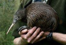 aotearoa home / new Zealand ...the best zealand