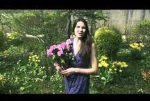 Conseil Vidéo jardinage - Mon Eden / Retrouvez en vidéo tous nos conseils en jardinage, qui vont vous permettre de profiter d'un jardin réussi et toujours en bonne santé !