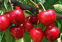 Foire aux fruitiers / Grand choix d'arbres fruitiers en direct du producteur et livré sur toute la France !