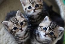 ~KITTY KITTY KITTY~ / Sweet kitty cats. I love them all.  / by ~Larita~