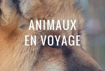 Animaux du monde / Collection en photographie des animaux du monde : les capter en image et les laisser libres...