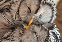 My precious owl