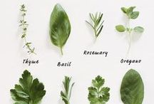 PLANT THERAPY / Therapeutic plants we love....