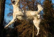 """""""lustigstes"""" Hundebild im März 2014 / """"Dein lustigstes Hundebild"""" im Mottomarathon vom März"""