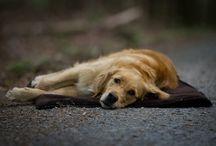 actionfactory präsentiert seine FIT4DOGS Produkte / Funktionale und hochwertige Hundesport Zubehör Artikel.