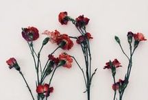 FLOWER THERAPY / Learn about medicinal, healing and beautiful flowers