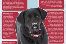 Pet Safety / How to keep you pet safe in different weather, holidays, or life in general