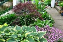 Shade Plants and Ideas | Colorado Alpines & Wildflower Farm / Ideas for those shady spots in your gardens! www.thewildflowerfarm.com