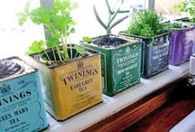 Green thumb. / Home gardening tips, tricks and ideas.