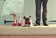 Animal Wedding Crashers / Adorable ways to include your pet in your wedding