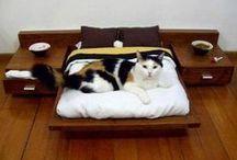 Sonho dos pets / A decoração de um lar leva em conta as necessidades e estilo de todos moradores, inclusive do gatinho, do cãozinho, do passarinho... Eles são da família! <3