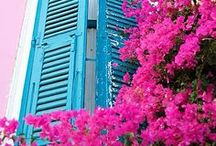 Bougainvillea love / Bougainvillea always makes the difference; all looks better with these generous plants named by french sailor Louis Antonie Bougainville in 1790 in Brazil. .........If you like what you see here, then repin and follow me! / by Elena Sheveleva
