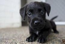 Dog / Gli esserini che più amo al mondo!!