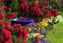 Gardening / Relaxation