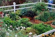 Garden ideas / next summers garden
