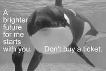 Take The Pledge to Not Buy a Ticket to Marine Parks or Dolphinariums. THANK YOU! / Please help put an end to marine parks/Dolphinariums around the world by not buying a ticket to these places. These animals are suffering greatly in captivity and Dolphins are being slaughtered because of this industry. By following this board, you are making a public pledge to not patronize any place that imprisons these awesome mammals. Lacking the demand, these places will be forced to close. If you'd like to collaborate to this board, just let me know. THANK YOU FOR YOUR SUPPORT!  Please be respectful and only post applicable pins.