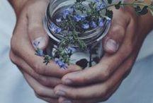 | Beautiful flowers in blue | / Flowers in blue colors.