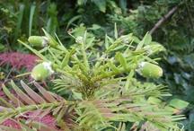 Prehistoric plants / Pictures of prehistoric plants