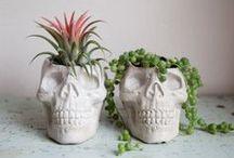 Flores e plantas / by Yasmine Festugato