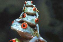 Reptiles y anfivios