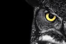 ❤ owls ❤