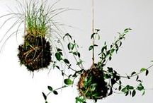 Nature inspired - home decor