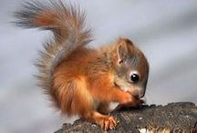 Squirrels Squirrels Squirrels!