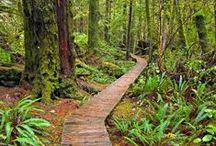 Temperate rainforest / Temperate rainforests are found all over the world, but usually in very small areas. They are more threatened than the tropical rainforests and also have more biomass pr. area than the tropical rainforests - but have fewer species pr. area than the tropical rainforests. It's a rare biotope which needs protection and might be right outside your doorstep.
