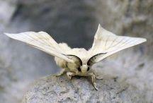 ❣ butterflies & moths ❣