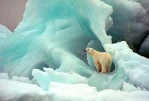 ♠ polar bears ♠