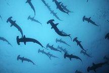 ○ sharks ○