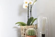 mijn interieurs - my interiors / Tessa van Hoogstraten Interiors - www.tessavanhoogstraten.nl -Interiors - Home - Inspiration - Colour - Design - Living - Decoration - Style - Furniture - Livingroom - Bedroom - Kitchen - Bathroom - Cafe - Restaurant - Bar - Horeca - Interieur - Styling - Design
