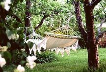My favorite dream garden