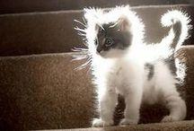 Kittens, Inspired by Kittens