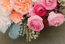 blooms. / by Melanie Marshall