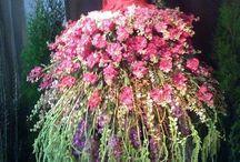 FLOWERS - FLORALS - FLEURS - FLORES - FIORI - BOUQUETS / Beautiful flowers!
