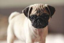 too cute. / by allie | alliewears