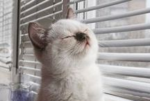 Cats in windows / by Maryanne