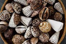 Shells & Corals / Bleached Natural Nature