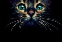 Cats / Love