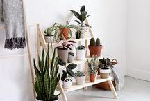 Plants & Gardening / Bringing nature indoors.
