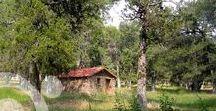 Sabinar de Calatañazor Natural Monument / An ancient juniper wood, close to the medieval village of Calatañazor. More information to plan your trip in www.qnatur.com