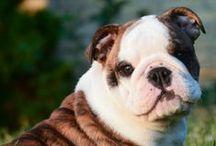 Pet Behavior/Training Tips