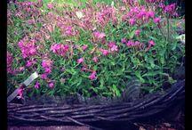 Садик-огородик / Идеи для дачи и сада.